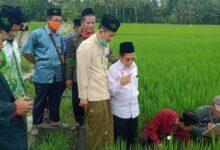 LPPNU Jawa Tengah Analisis Tanah Sawah Untuk Pertanian Organik
